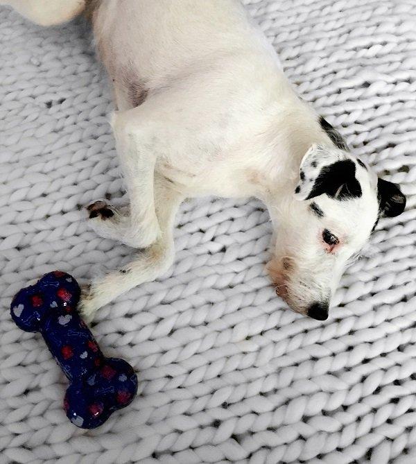 Hunde Accessoires für Hundeliebhaber