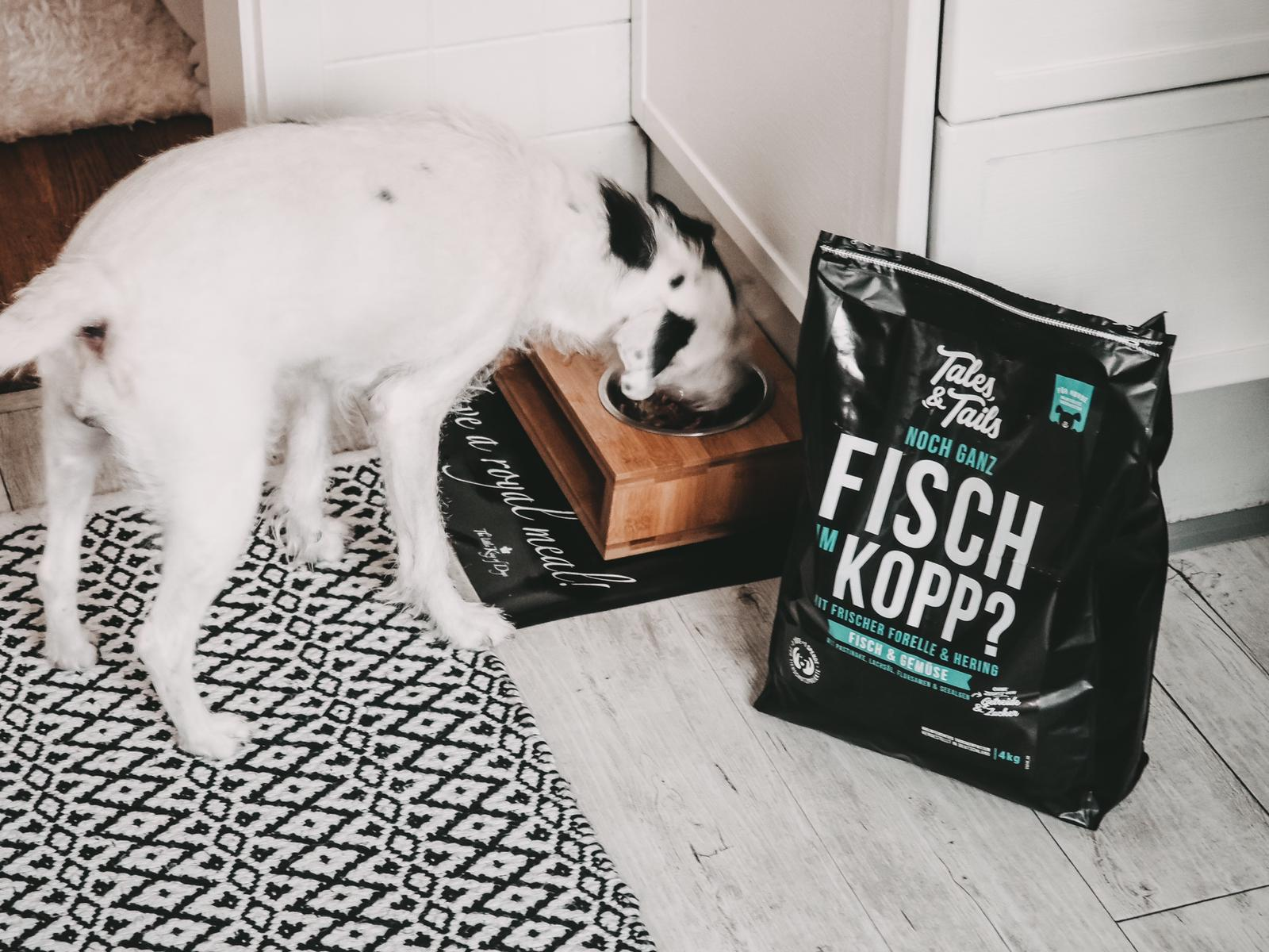 Tales and Tails Hundefutter basiert auf Fisch