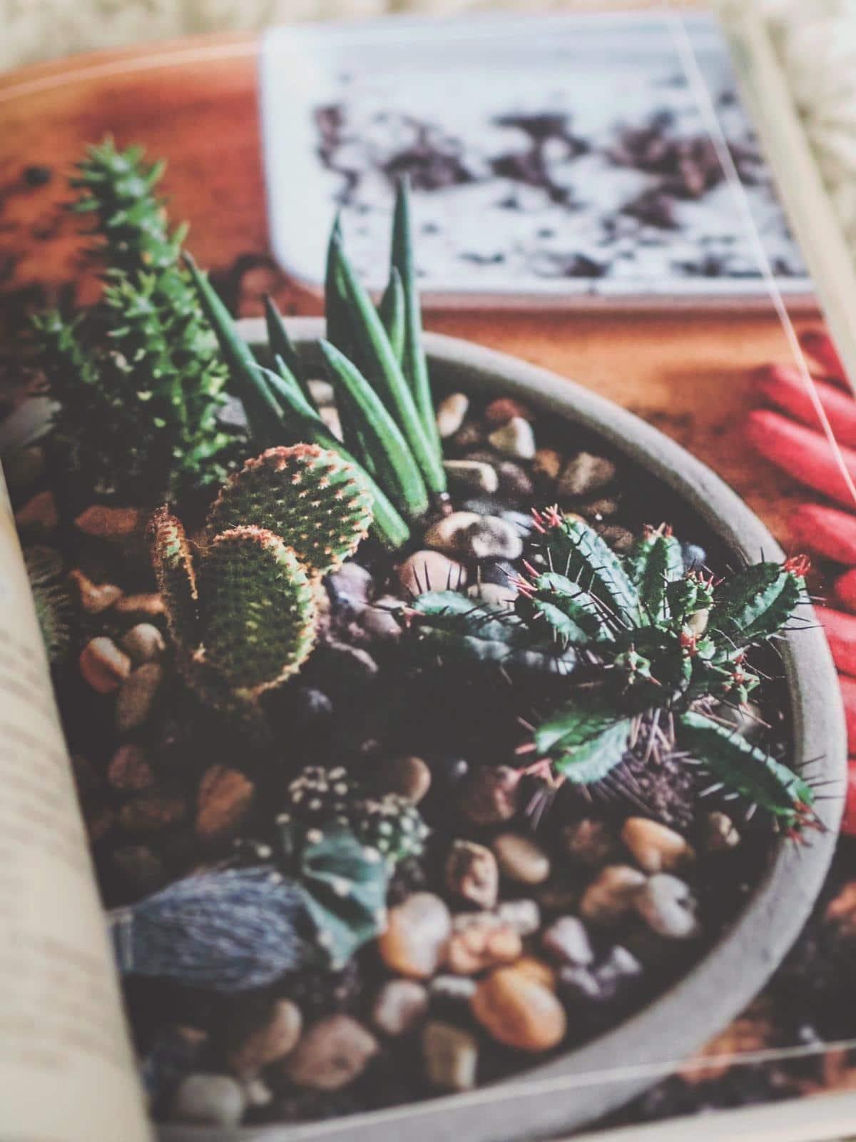 Für Pflanzenfreunde perfekt - Mein Pflanzenjournal von Julia Ruda